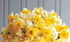 flower arrangements Get ready for the spring – flower arrangements Ideas for beautiful spring flower arrangements Afabulous e13939435217501 234x141