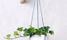 home decor How To Include Indoor Vines in Home Decor How To Include Indoor Vines in Home Decor 5 1 234x141
