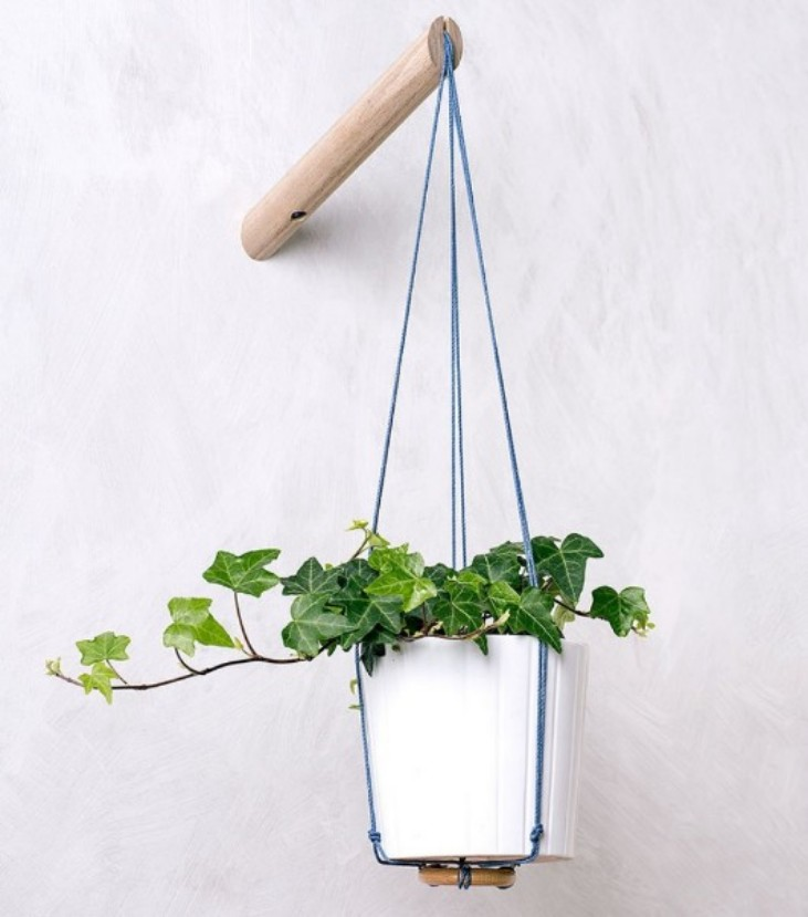 home decor How To Include Indoor Vines in Home Decor How To Include Indoor Vines in Home Decor 5 1