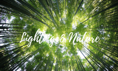 Modern Lighting Ideas_ Nature & Modern Lighting Designs