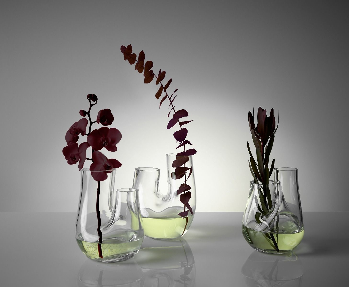 Plant Is All You Need In Your Home Interior Decor! 1