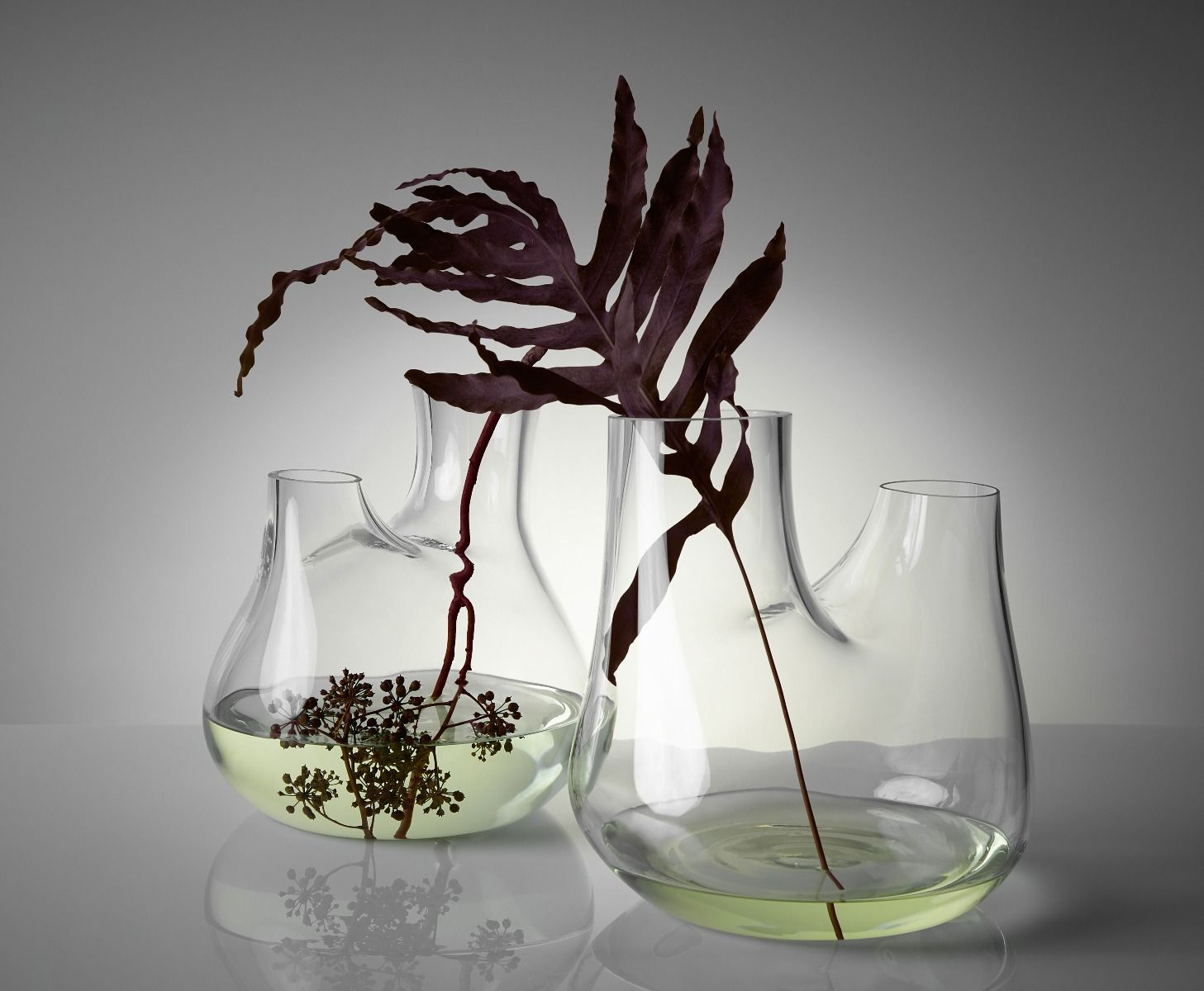 Plant Is All You Need In Your Home Interior Decor! 3