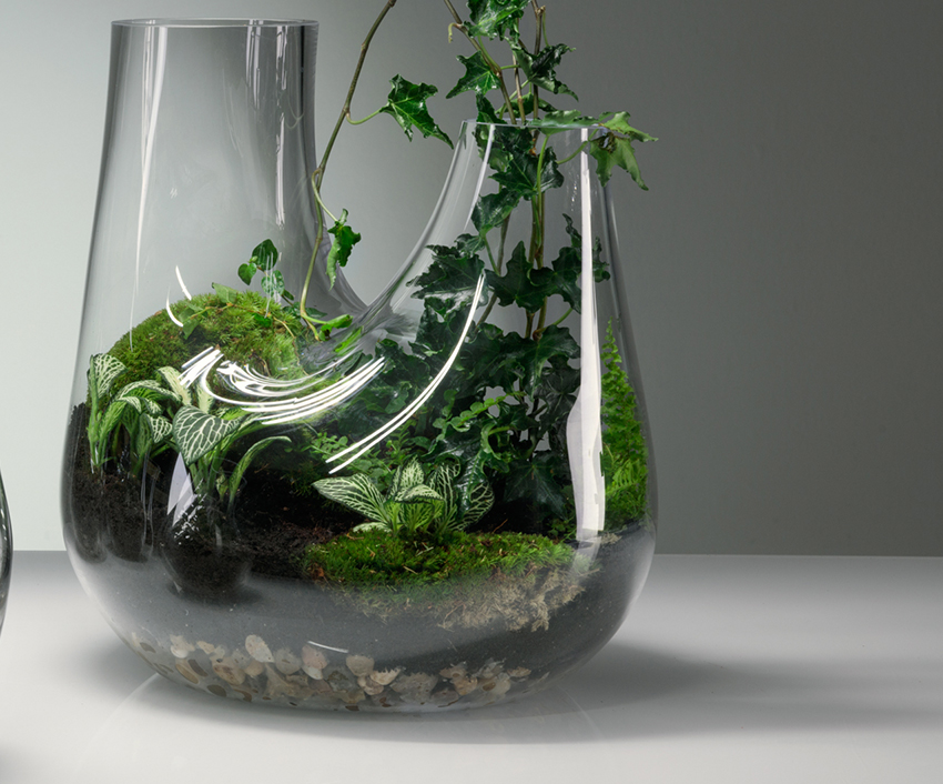 Plant Is All You Need In Your Home Interior Decor! 5